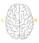 brain_en